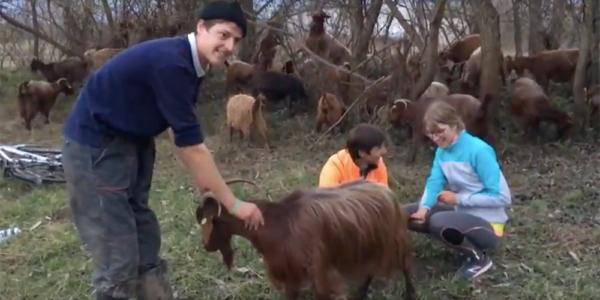 Nora beim Ziegenmelken