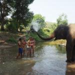Elefanten Chiang Mai