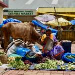 Markt_Frau_Kuh_Indien