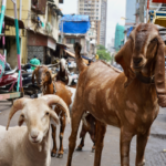 Ziegen_Strasse_Mumbai